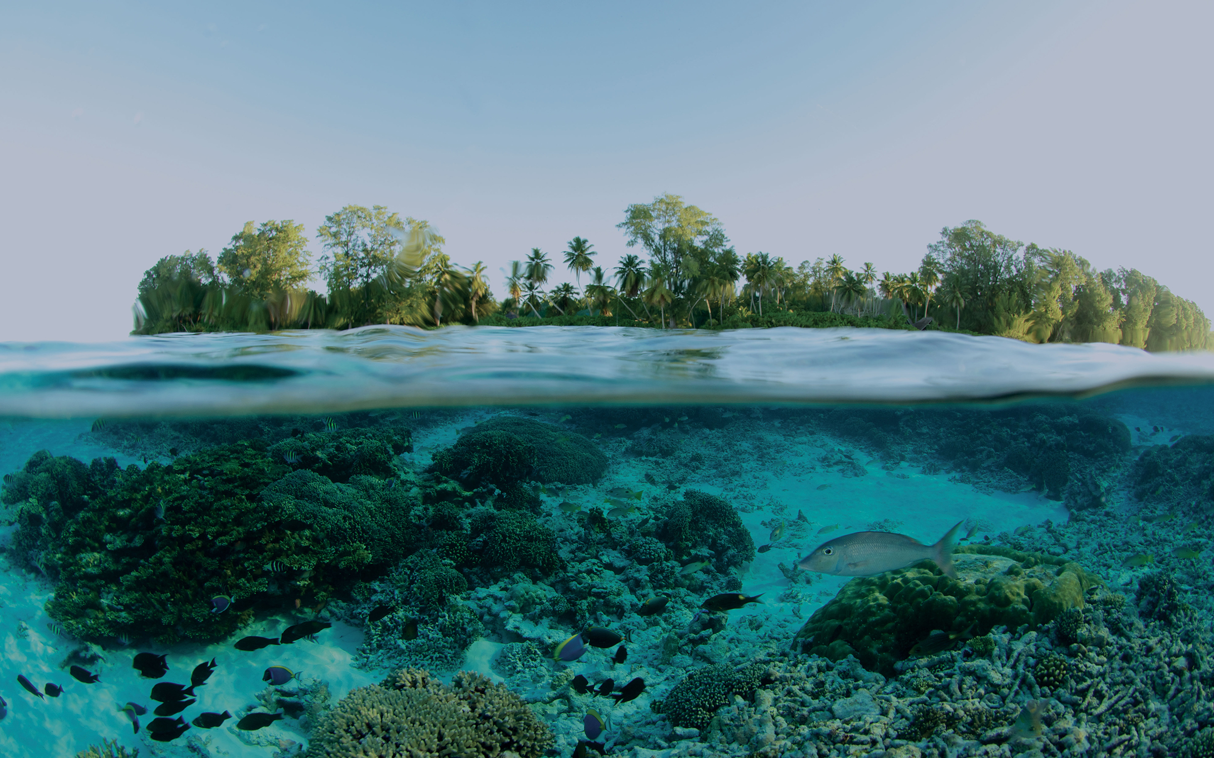 Photo splitting a tropical water line with fish below and an island above