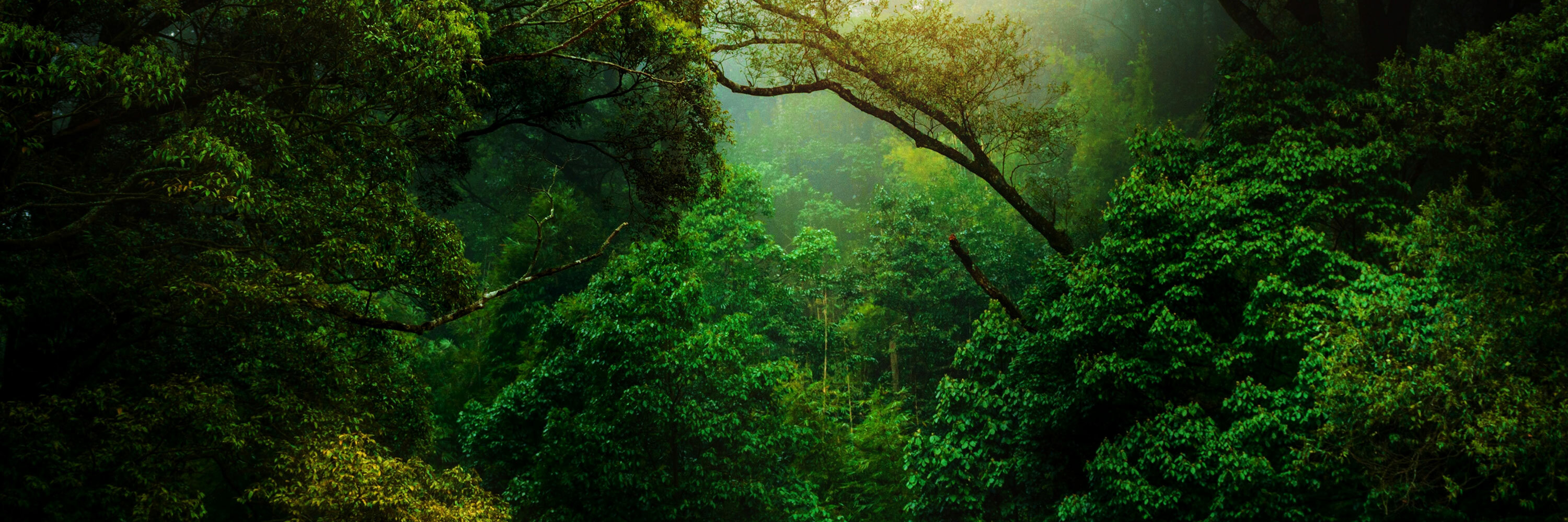 Panoramic of trees in the Amazon rainforest