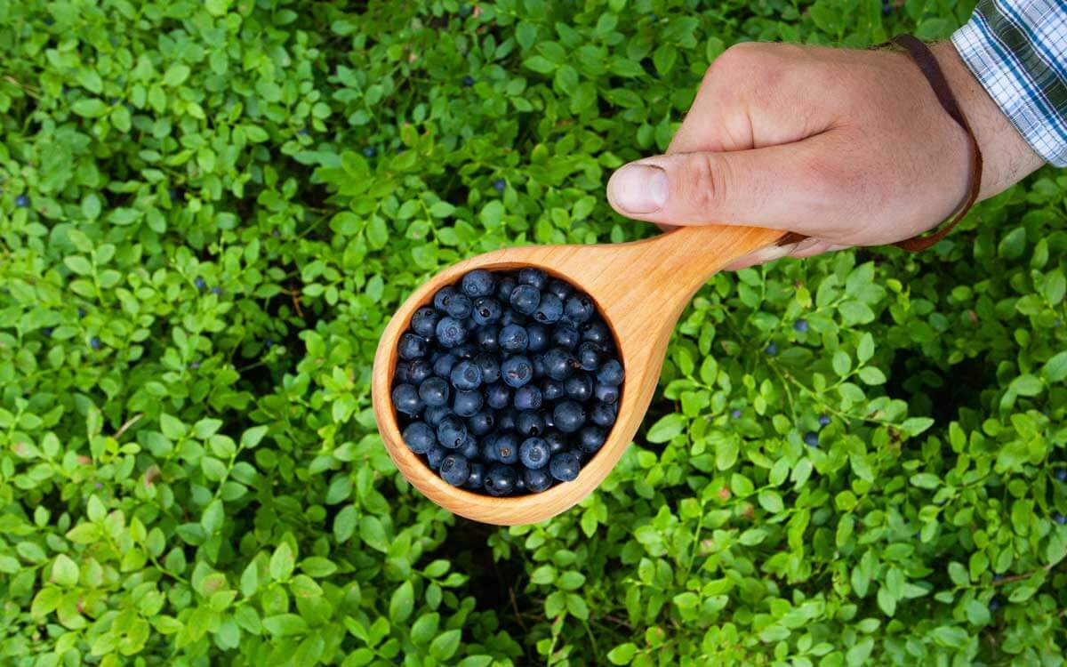 A hand holding a cup full of fresh blueberries