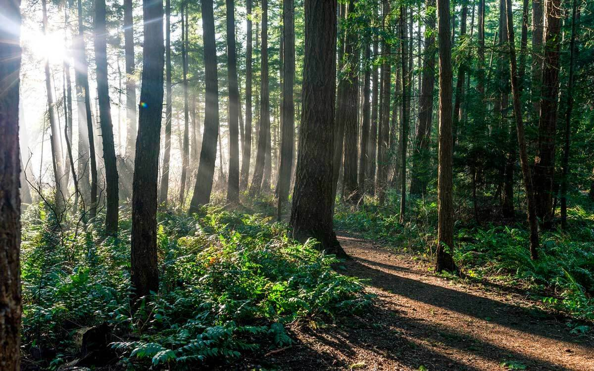Leafy forest with sun shining through the trees