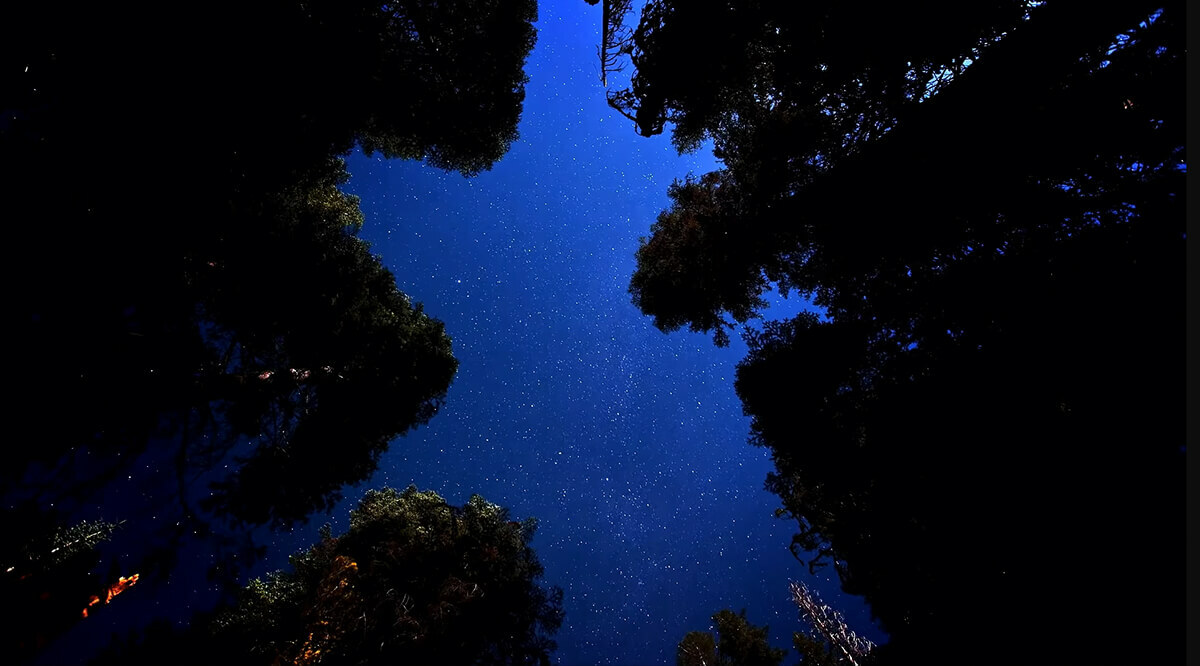 View of the night sky looking up through trees