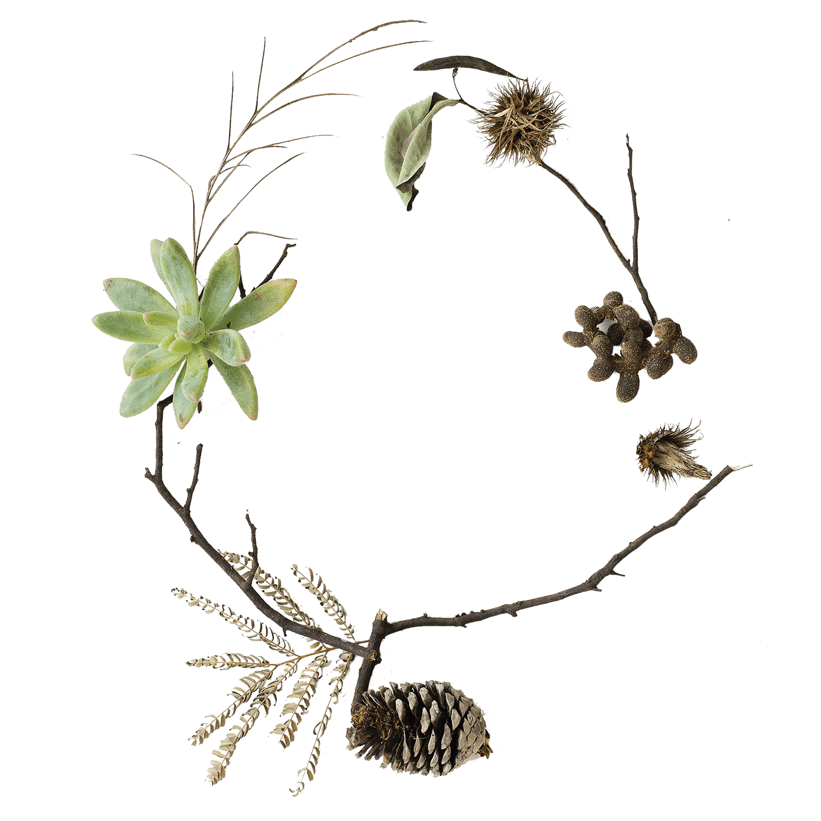 Tree sprigs forming a circle