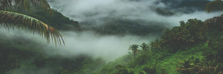 Misty rainforest valley
