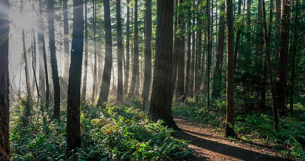 Sunlight breaking through forest
