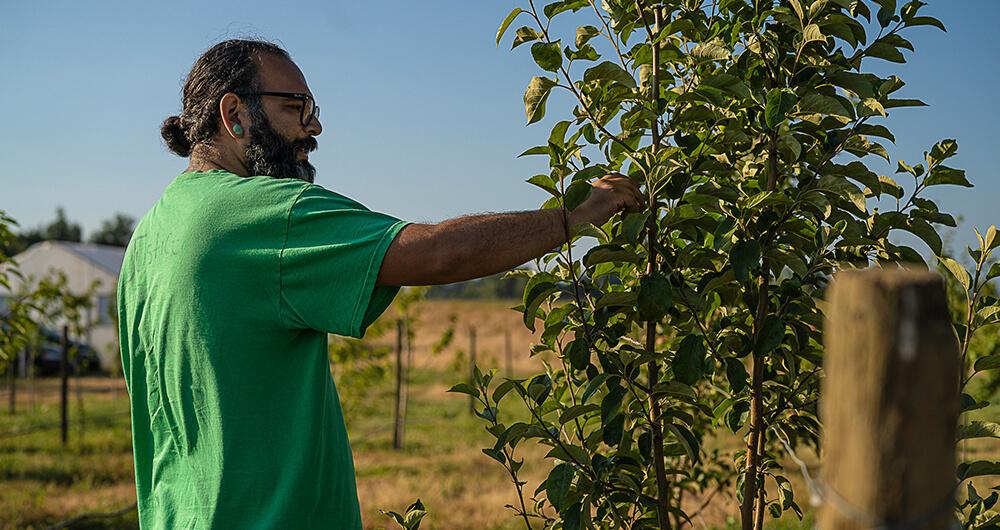 Farmer inspecting a tree