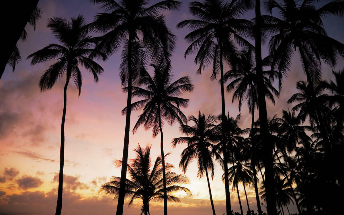 Palm trees with a sunset in the background