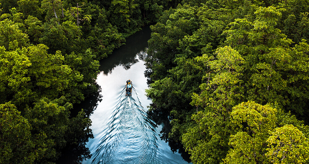 Boat on river cutting through jungle