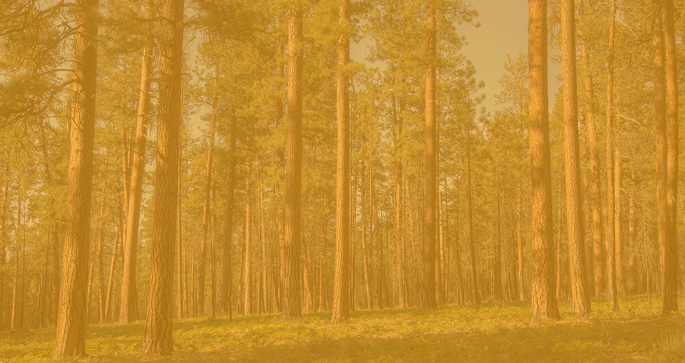 Klamath pine forest