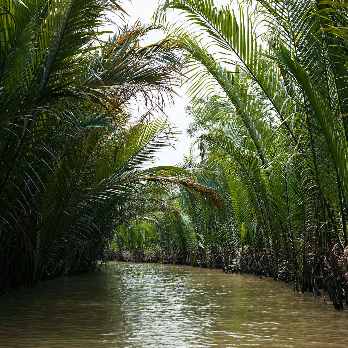 Waterway surrounded by lush greenery